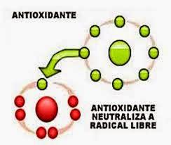 INTRODUCE ANTIOXIDANTES A DIARIO