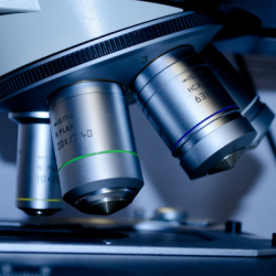 Test de Helicobacter pylori