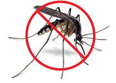 Stop a los mosquitos: nuestros consejos