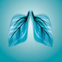 Vías respiratorias