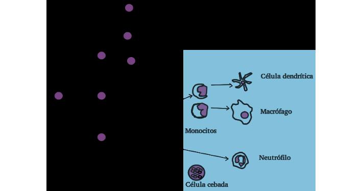 infección parasitaria e inmunidad ppt