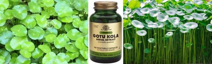 Gotu Kola (Centella asiática): un gran cicatrizante