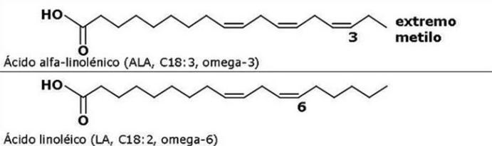 Omega 3, Omega 6 y Omega 9