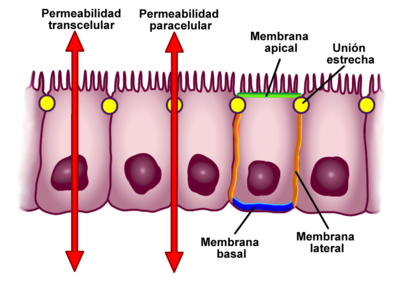 Imatge: Wikipedia