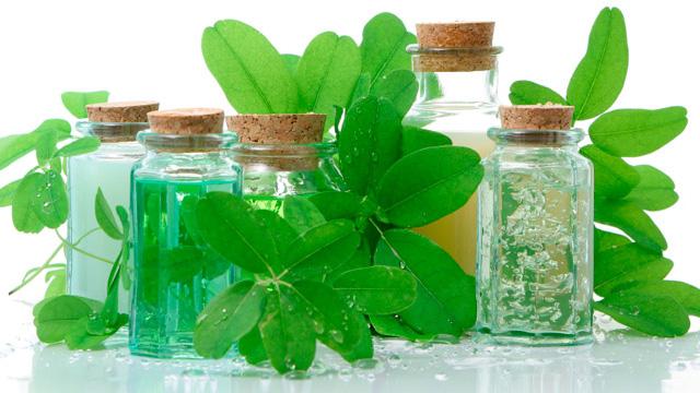 El decálogo básico de las plantas medicinales
