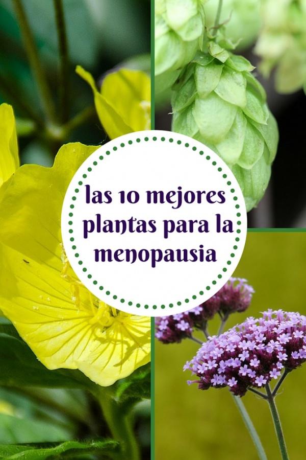 Las 10 plantas que pueden ayudarte en la menopausia