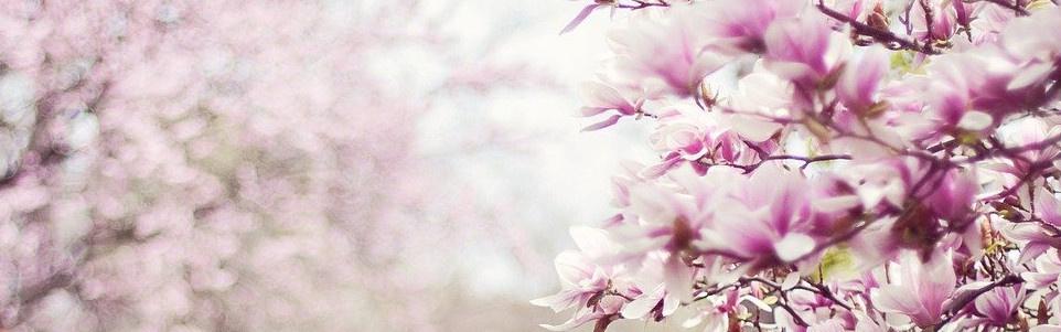 benvinguda primavera